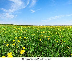 Yellow flowers  field under blue sky