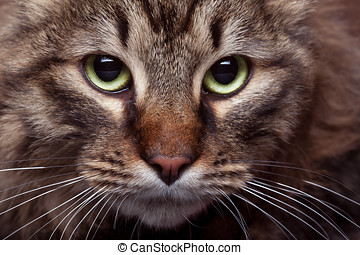 Green cat eyes in close up photo