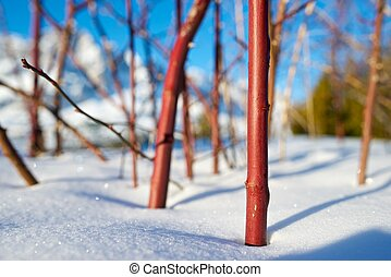 winter - closeup of a bush in Tena Valley, Pyrenees, Huesca,...