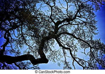 Silhouette of an old and crooked Oak Tree Branch