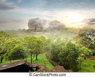Garden near Sigiriya - Green garden near Sigiriya at...