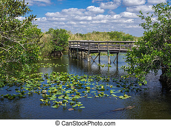 Florida Everglades Boardwalk - Anhinga Trail Boardwalk...