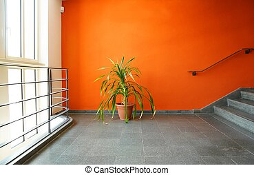 plant in pot on a orange wall - plant in pot on an orange...