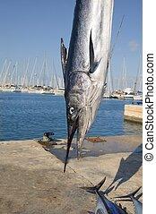 mediterranean spearfish billfish head tetrapturus belone...
