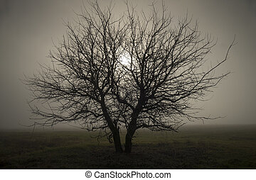 Lonely in the fog - Lonely tree standing in the fog the...