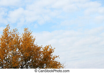 autumn herb - autumn sky and cloud overhand herb