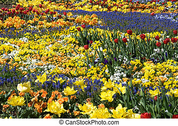 Floral Display - A colourful floral display at Floriade,...