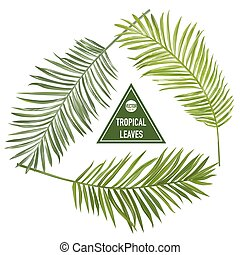 Set of Tropical Palm Leaves - for design elements, scrapbooking - in vector