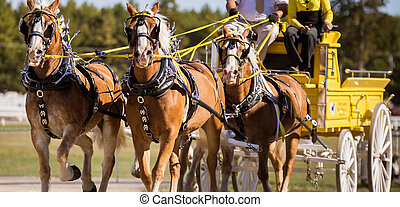 team of horse - Team of horse trotting at a fair grounds