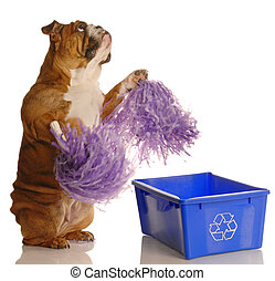 dog standing up with pompoms encouraging recycling - please...
