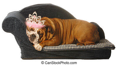 english bulldog lying in dog bed with tiara isolated on white