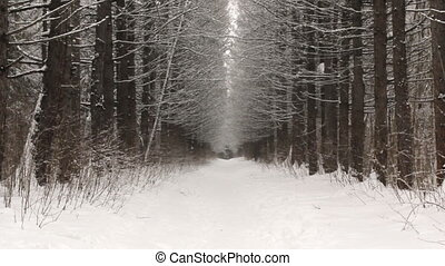 Snowfall on the background of the winter forest