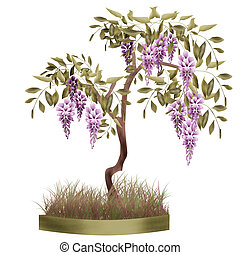 Bonsai potted tree with flowers of wisteria glicinia...