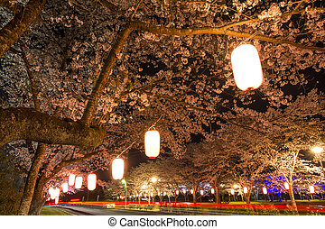 Cherry blossoms at night - Lined cherry blossoms along...