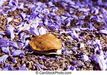 Small Jacaranda flowers and seed on road surface - Small...