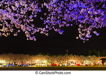 Illuminated cherry blossoms - Blue illuminated cherry...