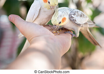 parrots on hand