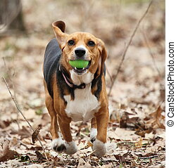 The Great Easter Egg Heist - A beagle running away with a...