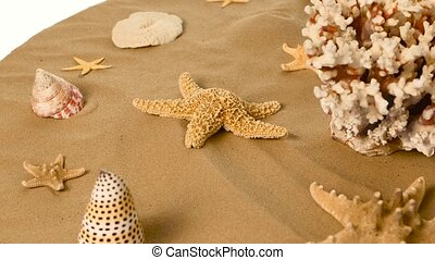 Starfish and shells on sand, white, rotation - Starfish and...