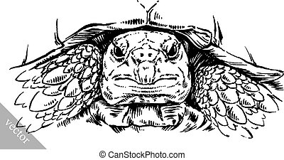 engrave ink draw turtle illustration - black and white...