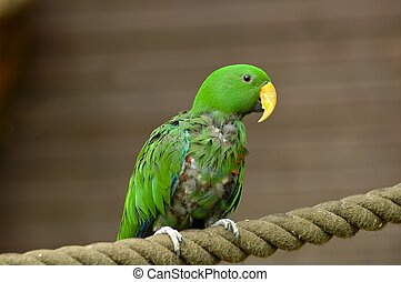 Parrot on the rope - Beautiful green parrot on the rope in...