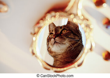 beautiful old vintage mirror and in it the reflection of a cat