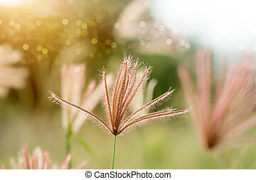 flower grass with sunlight