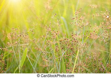 Flower grass and sunlight.