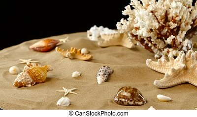 Yellow-white coral spiral and shells on sand, black,...