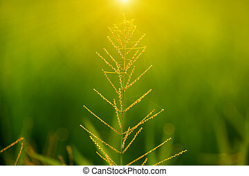 Flower grass and sunlight