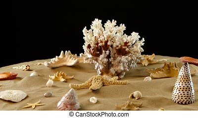 Nice big sea coral and different seashells on sand, black,...
