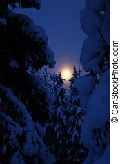 Moonrise at winter forest - Moon rising at winter evening...