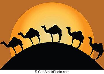 Camels in desert - Group of camels in desert