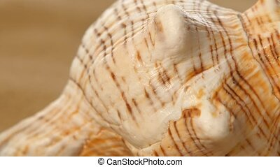 Sea shell, rotation, closeup - Sea shell, wildlife, ocean,...