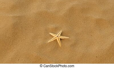 Small real starfish on sand, rotation - Small real starfish...