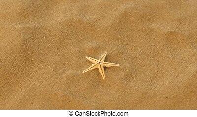 Small real starfish on sand, rotation