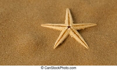 Small star on sand, rotation - Small star on sand, marine,...
