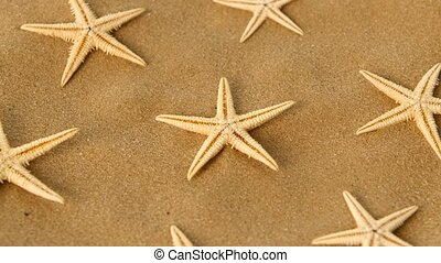 Big set of sea stars on sand, rotation