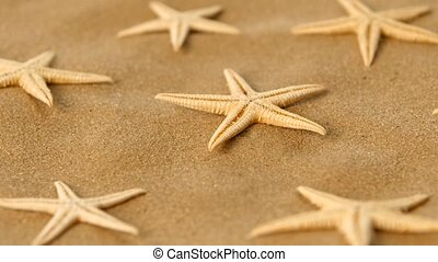 Many dried sea stars on sand, rotation