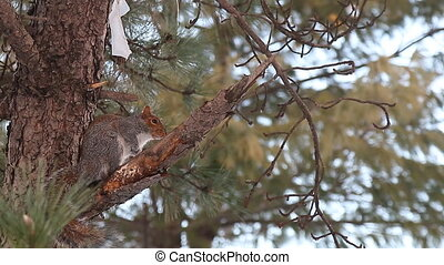 squirrel tree creature curiosity - squirrel tree species...