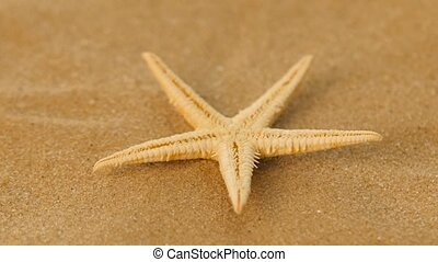 White, starfish, sea, rotation, closeup - White, starfish,...