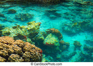Shallow coral reef in turquoise transparent water, Indonesia...