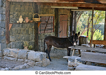 donkey in the archaeological park of Katzrin in the Golan...