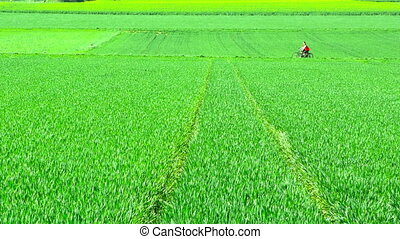 Riding Bike in Green Field Nature