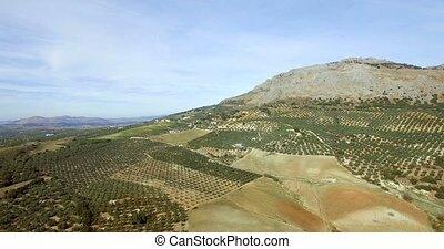 4K Aerial, Flight along olive trees - 4K Aerial, Flight...