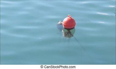 buoy on  lake