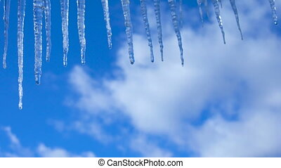 Icicles on a background of blue sky - Thawing icicles...