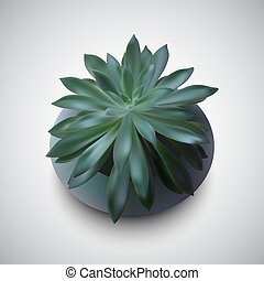 photo realistic succulent - Echeveria a beautiful succulents...