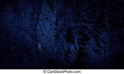 Aerial Above Forest Trees At Night - Flight over old growth...