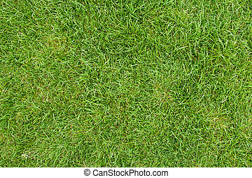 green grass field - canted green grass field, view from top
